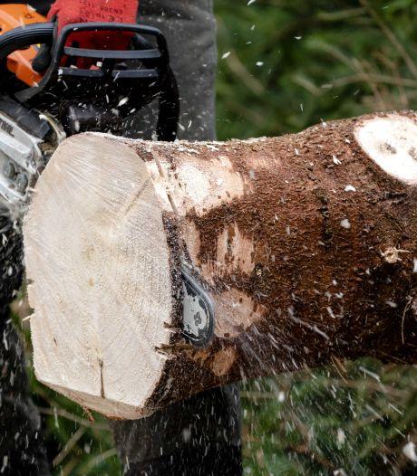 Dikke boete voor bomenkap bij nieuw huis in Steenwijkerland: 'Het was niet onze bedoeling om daar gedoe over te krijgen'
