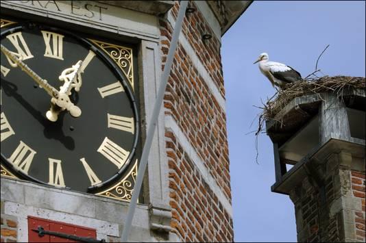 De ooievaars nestelen op een schoorsteen van het oude stadhuis in Gennep.
