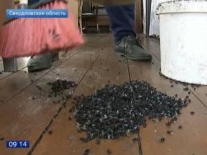 """""""Digne d'un film d'horreur"""" : des villages russes infestés par des mouches"""