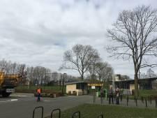 Buurman boos over kap boom bij ingang Margriet Oss