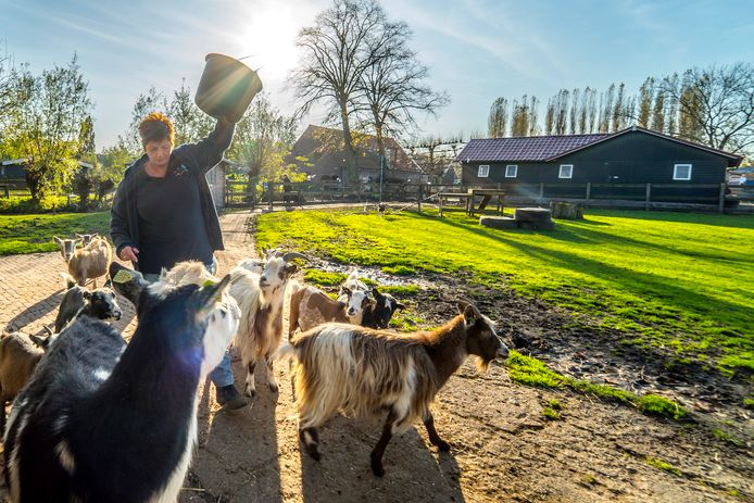 Kinderboerderij Tanthof weer onzeker over voortbestaan