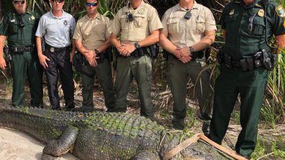 Kolossale alligator gevangen in park Florida maar in Australië nóg grotere krokodil, na acht jaar jacht