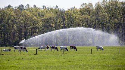 Oppositiepartij Groen wil droogteplan voor Opwijk