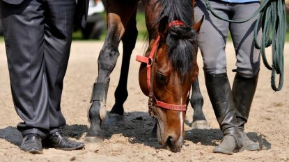 Ongeboren paard brengt 20.000 euro op in Zandhoven