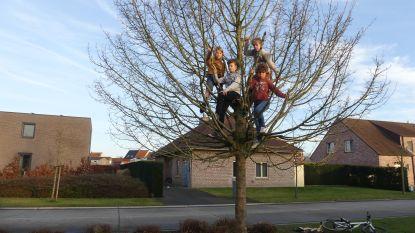 """Stadsdiensten breken boomhut van kinderen af: """"Maanden werk voor niets"""""""