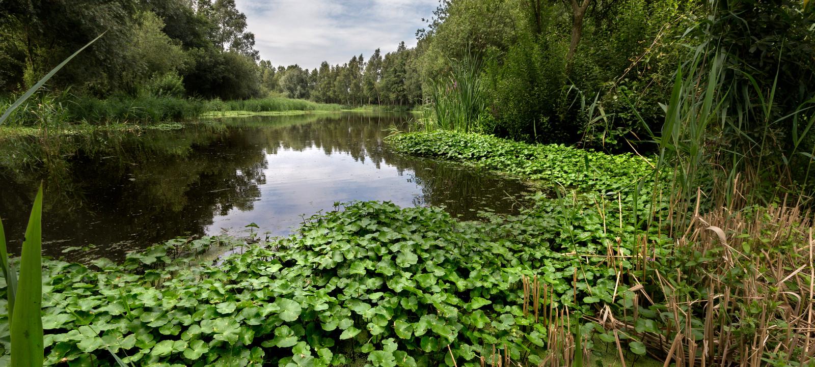 Bestrijden van waternavel is lastig, omdat stekjes in de oevers blijven zitten. Verwijderen moet bij voorkeur handmatig gebeuren.