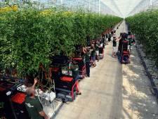 Kopzorgen rond arbeidsmigranten in Steenbergen: 'Het is net simultaan schaken'