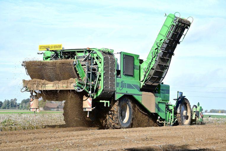 De nieuwe Puma 4.0 hier aan het werk op een aardappelveld in Moorsele
