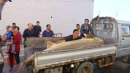 Chinese vissers halen stokoude steur van 514 kilogram boven