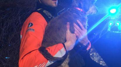 Bewoners en hondje ontsnappen aan ergste: brandweer voorkomt dat huis in vlammen opgaat