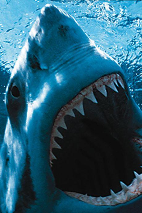10 redenen waarom je Jaws weer in de bios moet zien