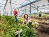 Zaaien en oogsten als dagbesteding op zorgboerderij D'n Aoverstep bij Neede