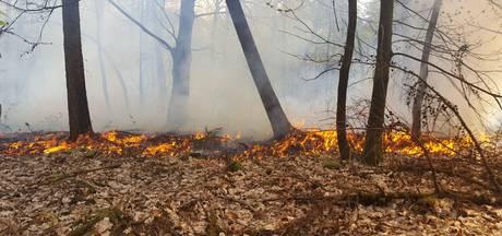 Pas op in heel Brabant met open vuur in het bos; overal geldt code oranje