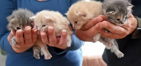Moederpoes maakt nest tussen containers, kittens gered van de plet