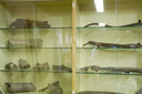 Vondsten van botten van oertijddieren in de loods bij het opgravingsterrein.