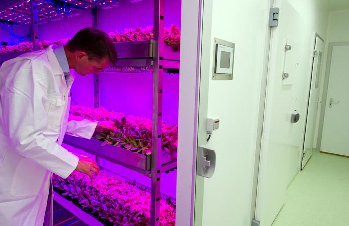 PlantLab in Den Bosch teelt op duurzame wijze groente, bloemen, planten en fruit.