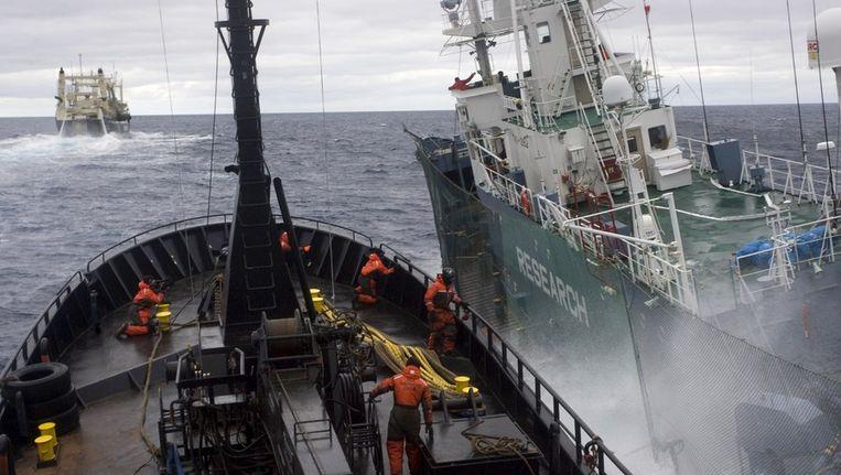 Een schip van Sea Shepherd komt langszij bij een Japans schip in de zee rond Antarctica. Beeld afp