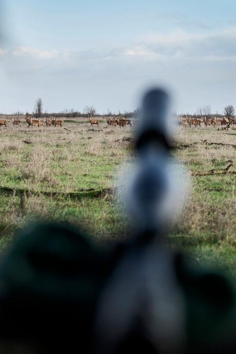 Eerste drie gedode herten blijven als voedsel achter voor vossen en roofvogels