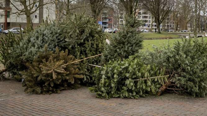 Tweede ophaalronde nodig in Lint om alle kerstbomen weg te halen