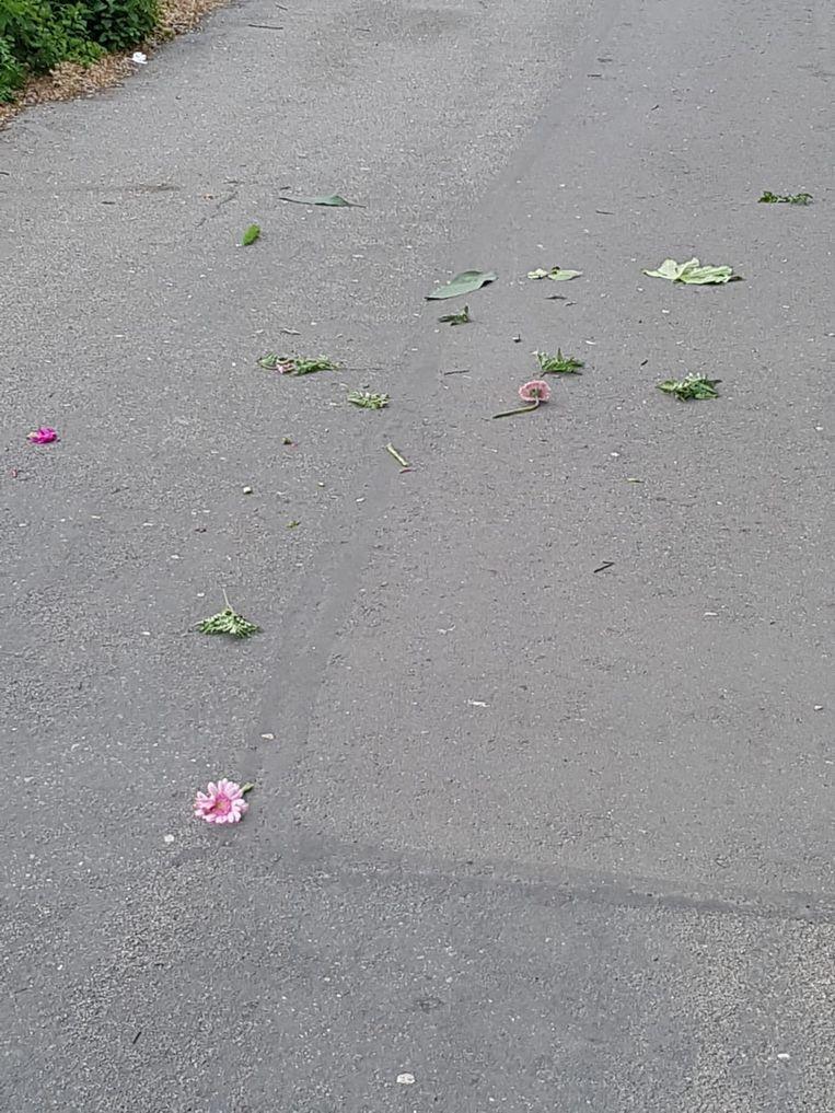 null Beeld Pink Nieuw-West