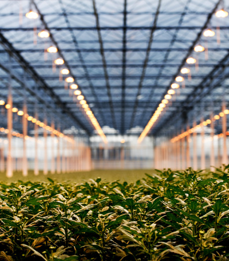 Westland spint garen bij nationaal tuinbouwakkoord