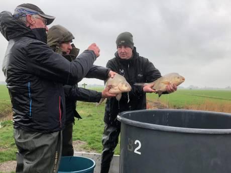 Vissen verhuizen uit Kraaiennest zodat weidevogels straks vrij spel hebben
