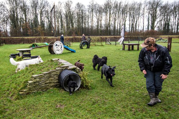 Hondenspeeltuin in Houten, ter illustratie.