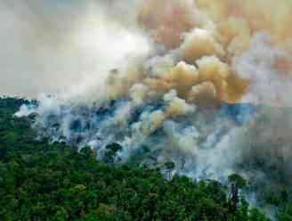 WWF: 43 miljoen hectare woud vernietigd sinds 2004