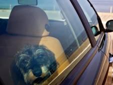 Hondjes achtergelaten in snikhete auto bij Batavia Stad: 'Hoe onverantwoord ben je dan?'