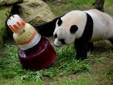 Online reserveren voor reuzenpanda's Ouwehands niet meer verplicht