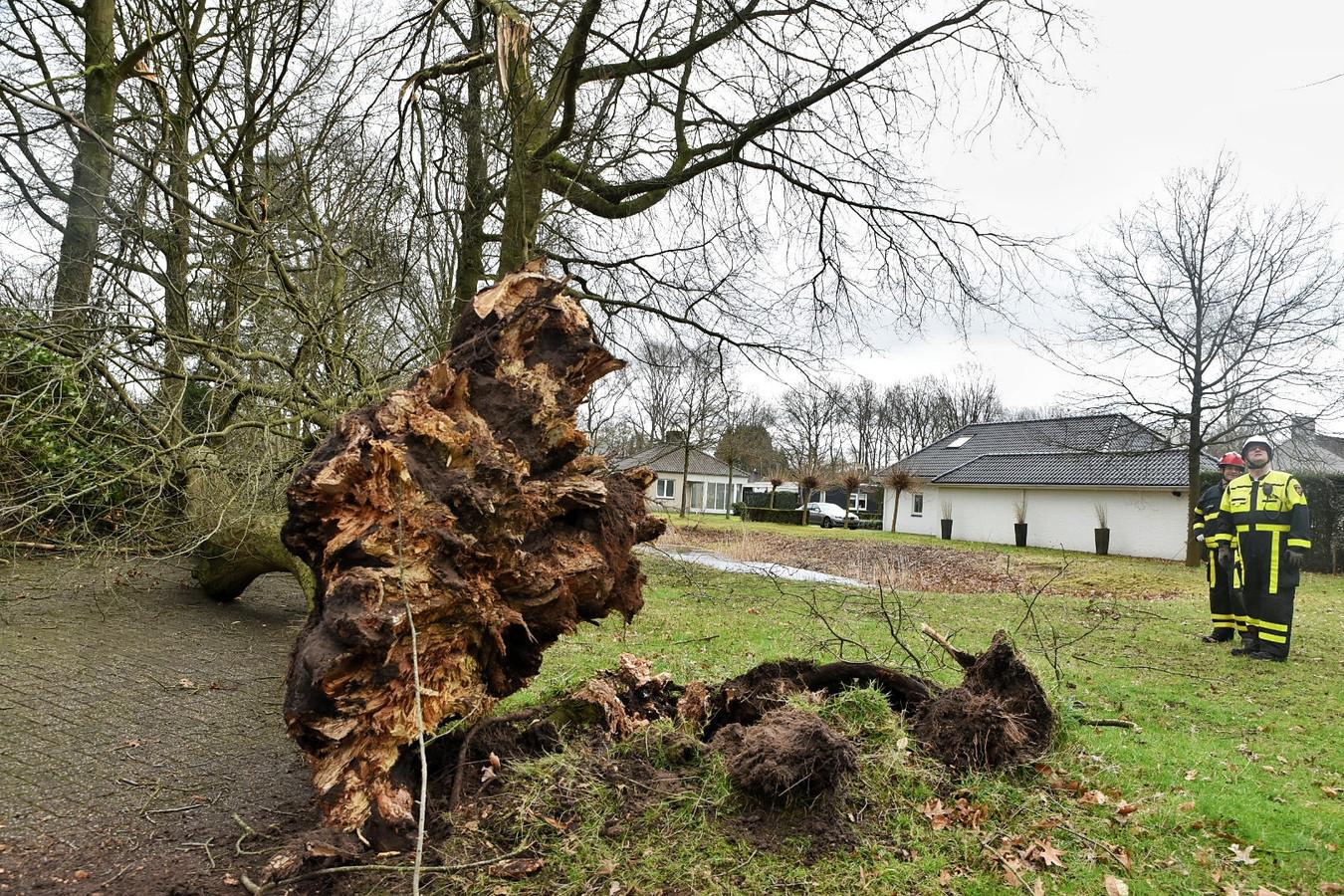 Bomen omver gewaaid aan de Europalaan in Oisterwijk.