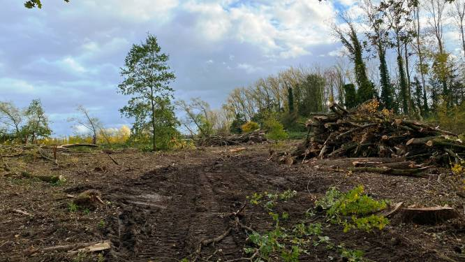 """Natuurpunt kop van jut voor bomenkap in Geelstervallei: """"Wij kochten dit bos zonder bomen want die waren al verkocht"""""""