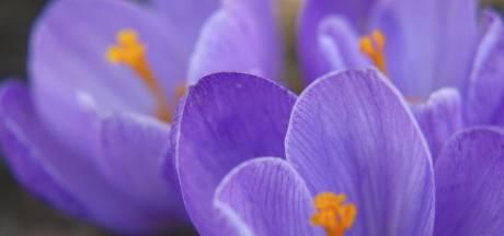 Tilburg: 350.000 bloemen voor  vlinder en bij op de Hart van Brabantlaan
