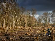 Schrikken van kaalslag Eiland van Brienenoord: 'Maar echt, het wordt weer net zo woest'