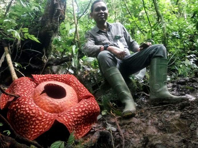 Een natuurbeheerder zit naast de bloem.