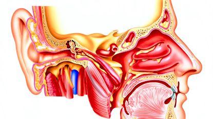 Wat er gebeurt bij geurverlies (en wat je eraan kan doen)