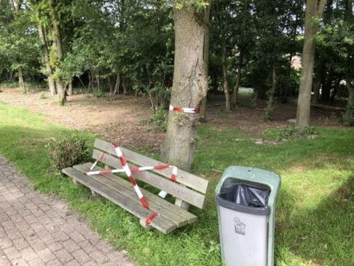 Het bankje onder de boom met de eikenprocessierupsen in Gramsbergen. Nadat Harm Touwslager bij het park meldde dat hij daardoor letsel had opgelopen werden rood-witte linten geplaatst. Enkele dagen later is het bankje verwijderd.