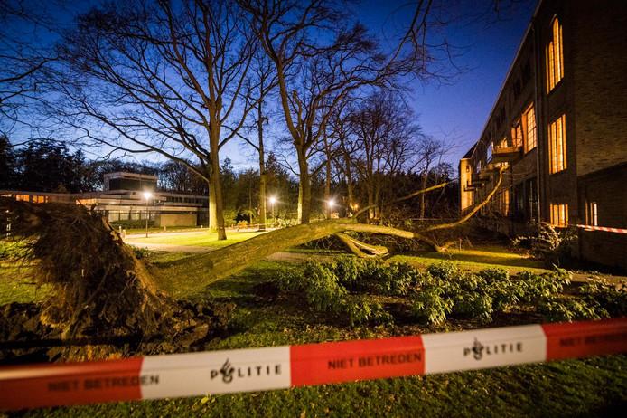 De boom miste op een haar na de balkons van de appartementen op Eikenburg.