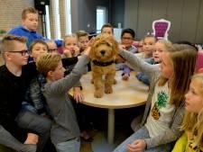 Meester Doedel: klein beestje met grote impact op Glanerbrugger basisschool