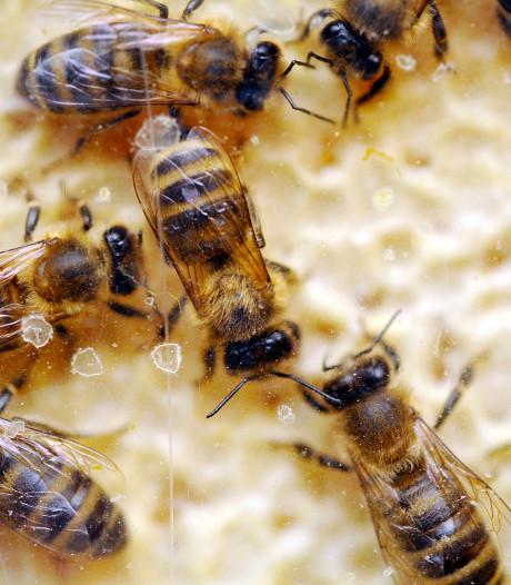 Honing oogsten in de Bemmelse Veldschuur
