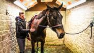 """Ook paardensport kreunt onder coronacrisis: """"Als dit blijft duren, gaan er in de problemen komen"""""""
