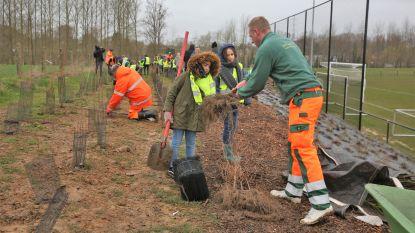 Geen weer om een hond door te jagen, maar leerlingen Ave Mariabasisschool planten 350 bomen en struiken aan voetbalsite SK Vlezenbeek