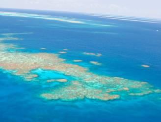 Beschadigd Great Barrier Reef bloeit in de diepte