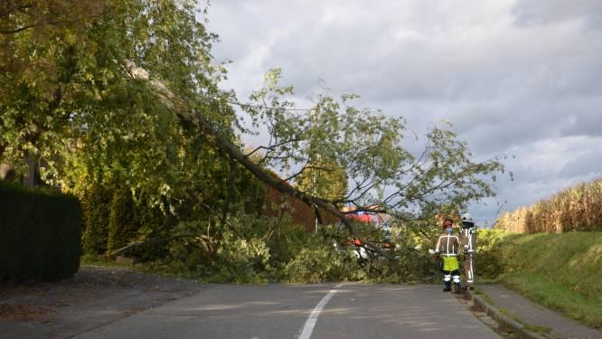 Brandweer uren in de weer om boom te verwijderen in Klemhoutstraat