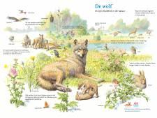 Komst wolf is juist goed nieuws