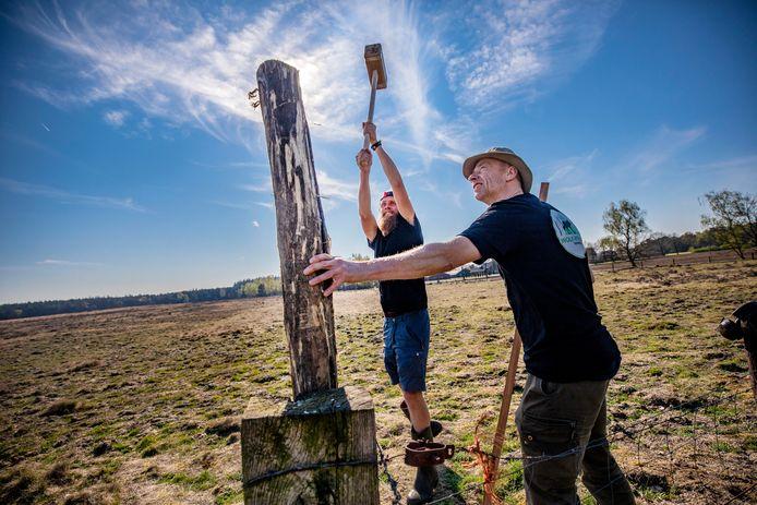Vrijwilligers van Wolf Fencing bouwen - eerder dit jaar - aan een wolfwerend raster rond de schaapskudde van Nunspeet
