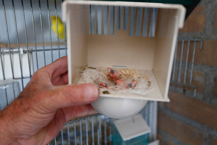 Enkele zeer jonge vogels konden worden gered bij een brand in Dommelen.