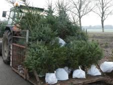 Kerstboom verliest naalden al voordat je hem koopt, droogte is boosdoener