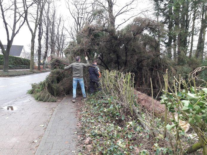 De boom viel uiteindelijk de goede kant op.
