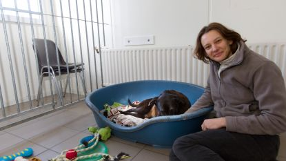 Genker asiel herkent aanbod honden en katten op sociale media